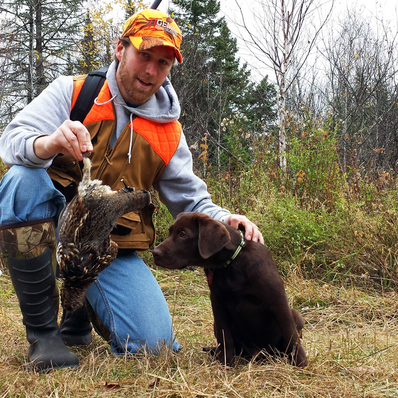 Labs Hunting Grouse Grouse Hunting With Chocolate
